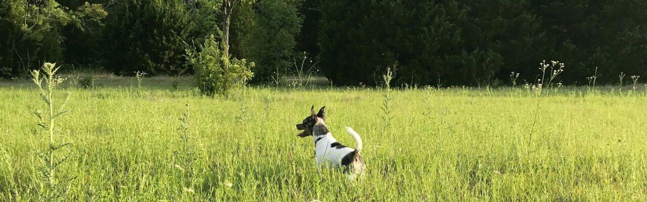 Cute puppy in a grassy field