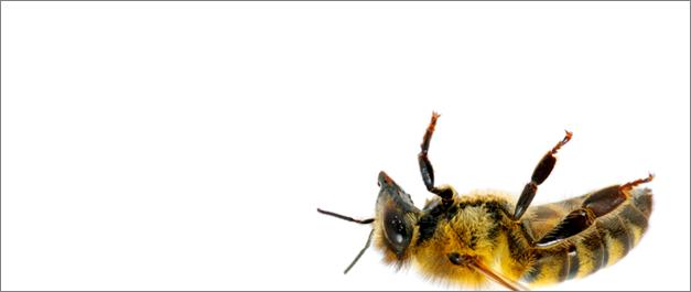 buzzwords3
