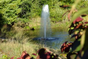 Fountain 010