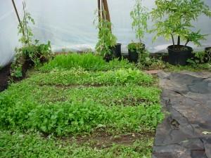 Eco Friendly Greenhouses