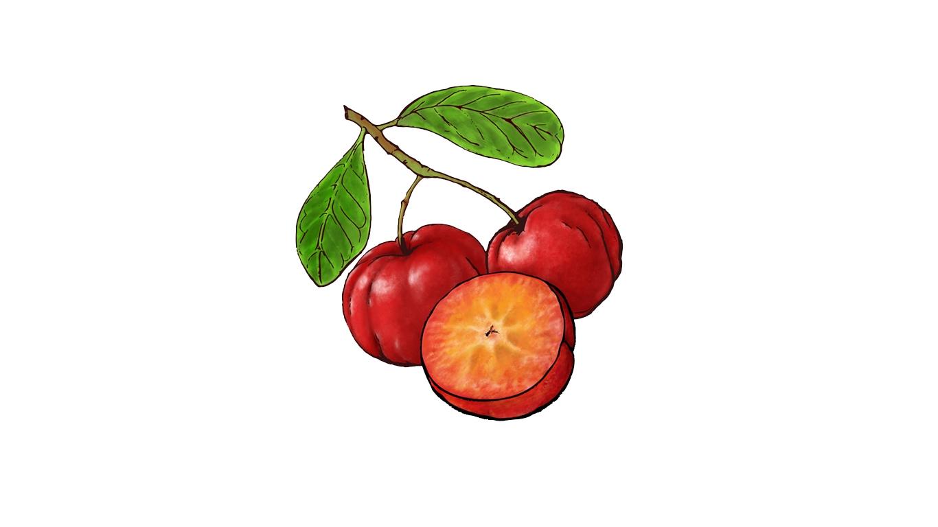 Acerola Fruit Illustration by Priscilla Prentice