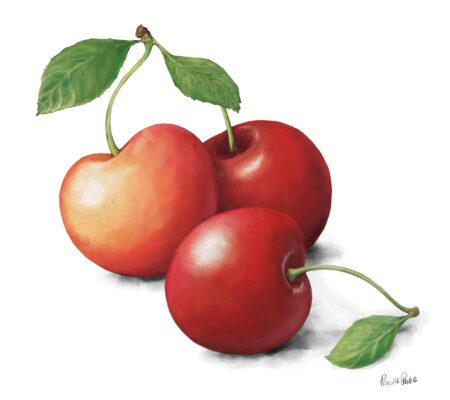 3 cherries in a group illustration by Illustrator Priscilla Prentice