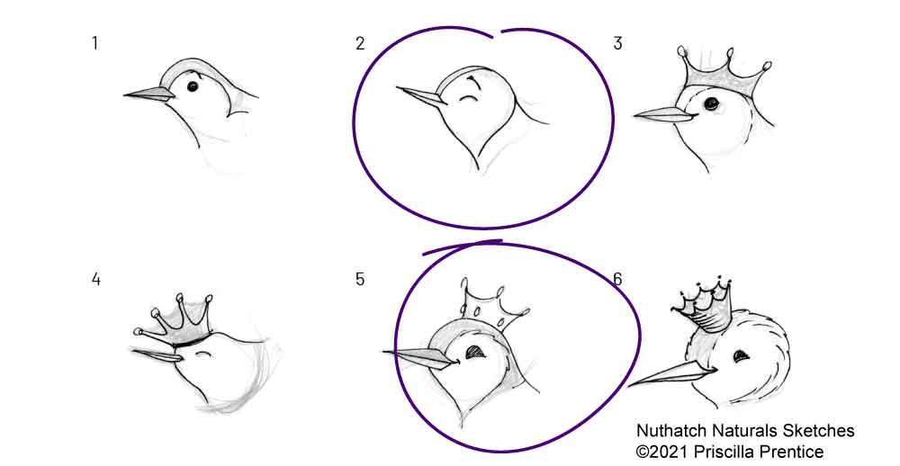 Nuthatch Naturals logo brand design sketches ©2021 Priscilla Prentice