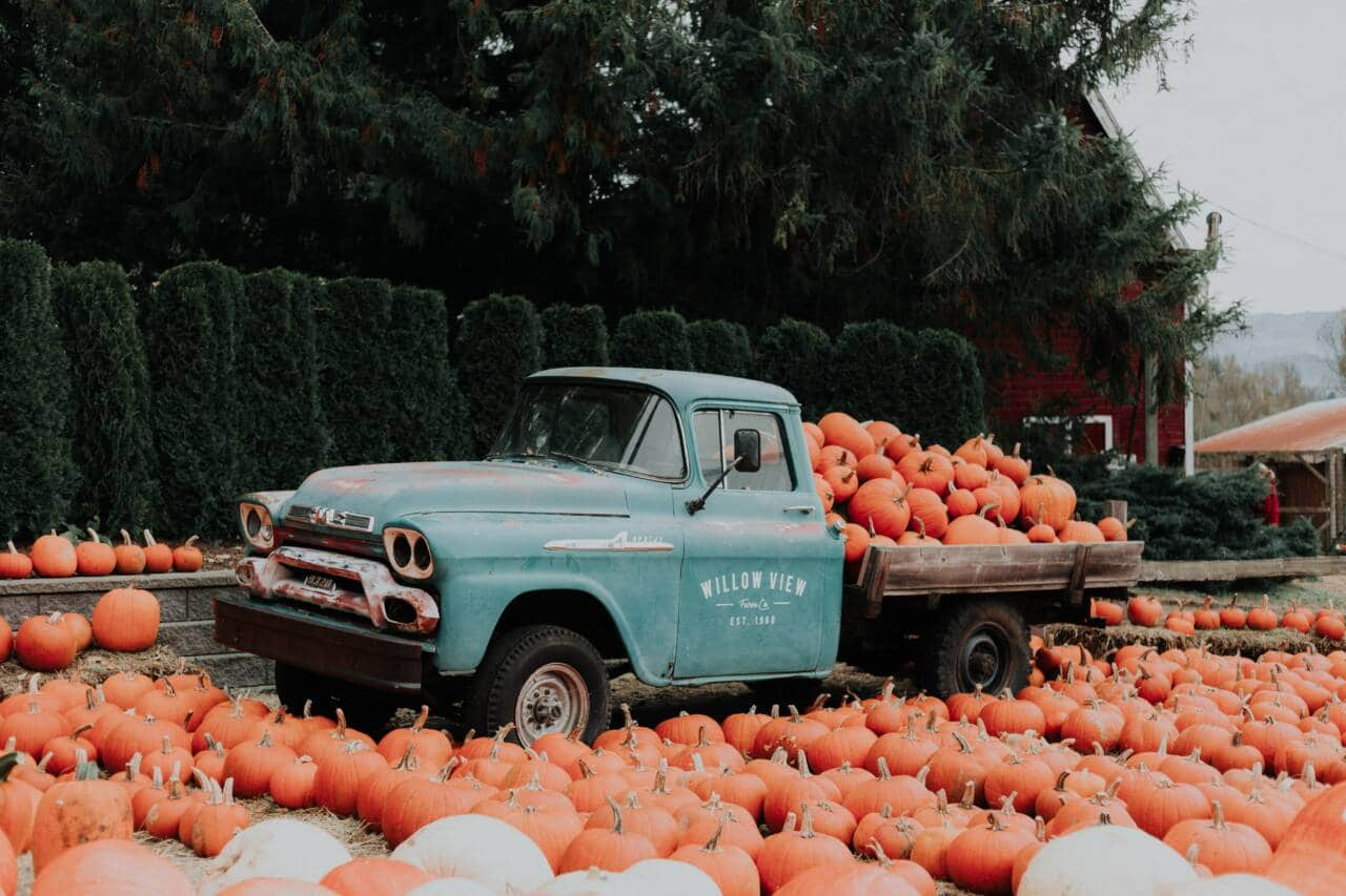 old truck will with pumpkins at pumpkin patch