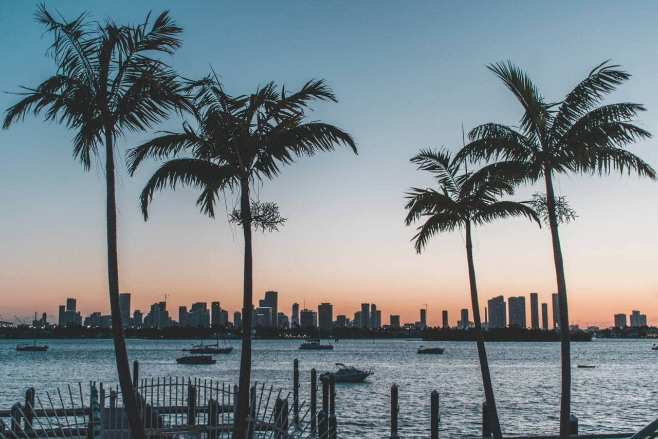 Miami Florida Skyline with Palm Trees