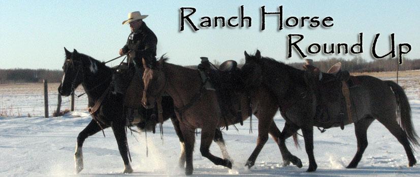 Ranch Horse Sale