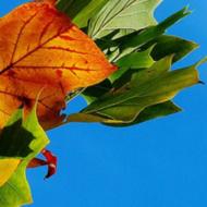 Frugal Linkup 55 Home Garden DIY Friday Blog Share