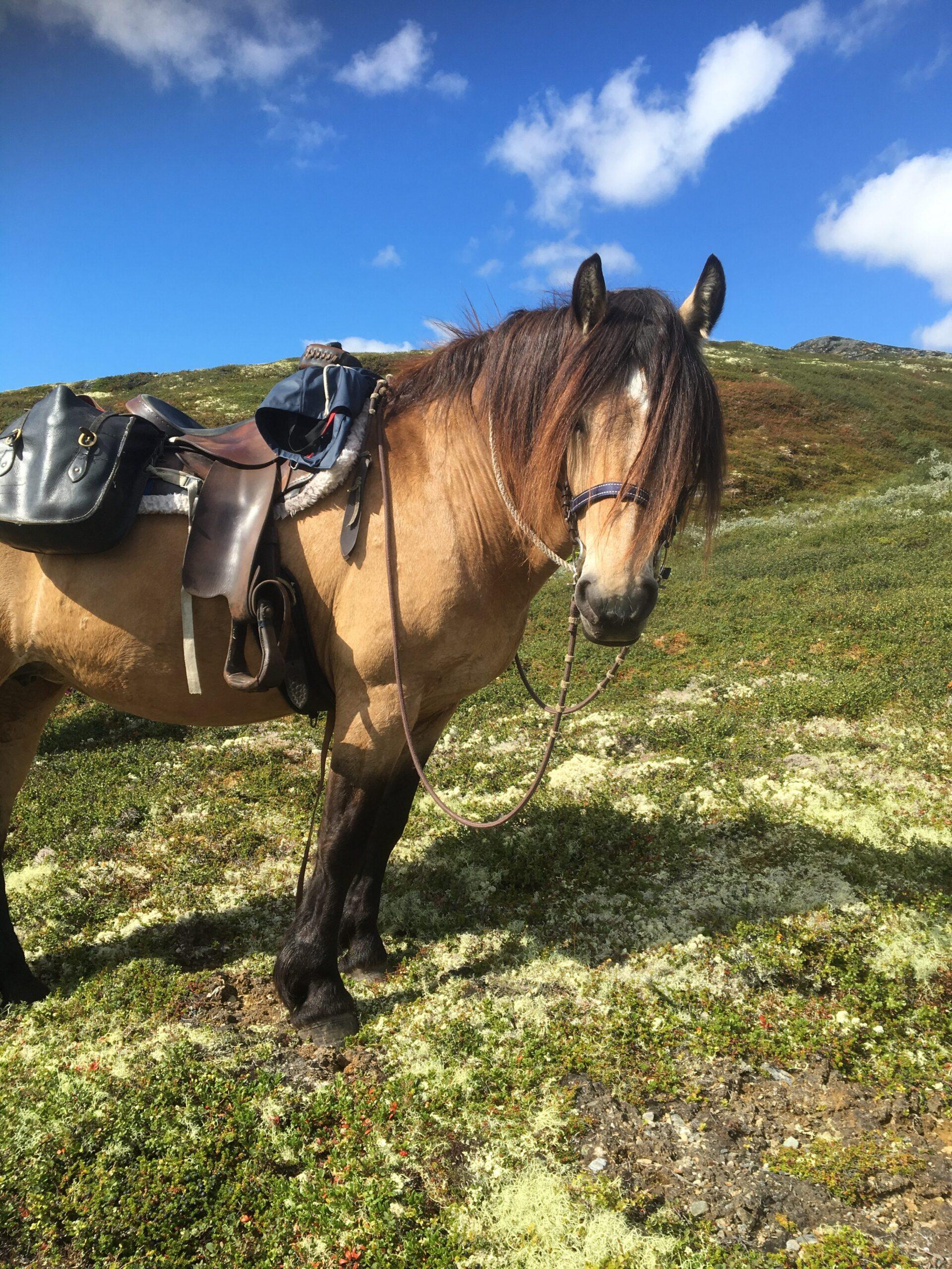 På hesteryggen i Rondane!