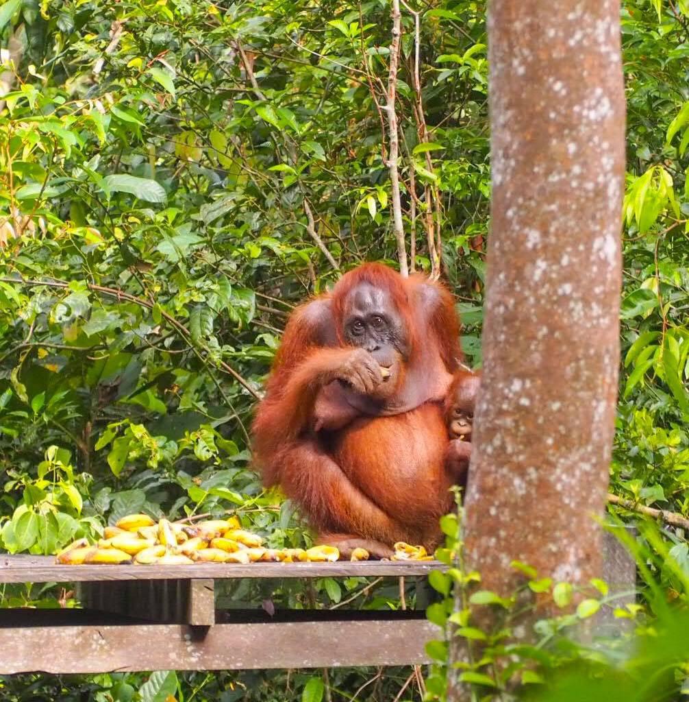 I Borneo's jungel!