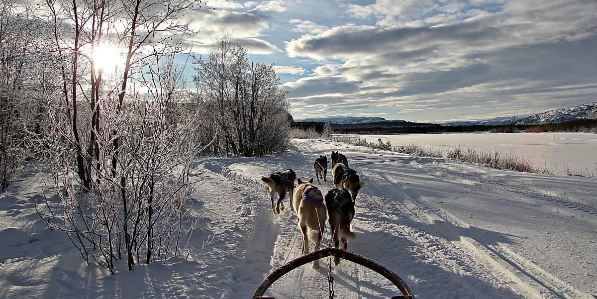 Et Husky eventyr på Finnmarksvidda!