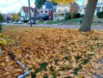 Butler City Leaf Dump Will Not Open This Year