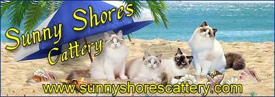 Sunny Shores Catttery