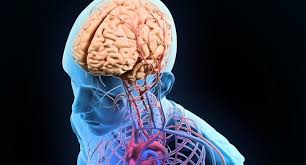 Our memories, feelings, and emotions are connected to the body