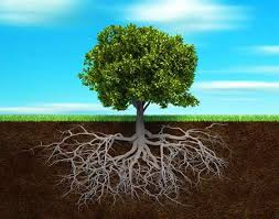 The Tree Conscious