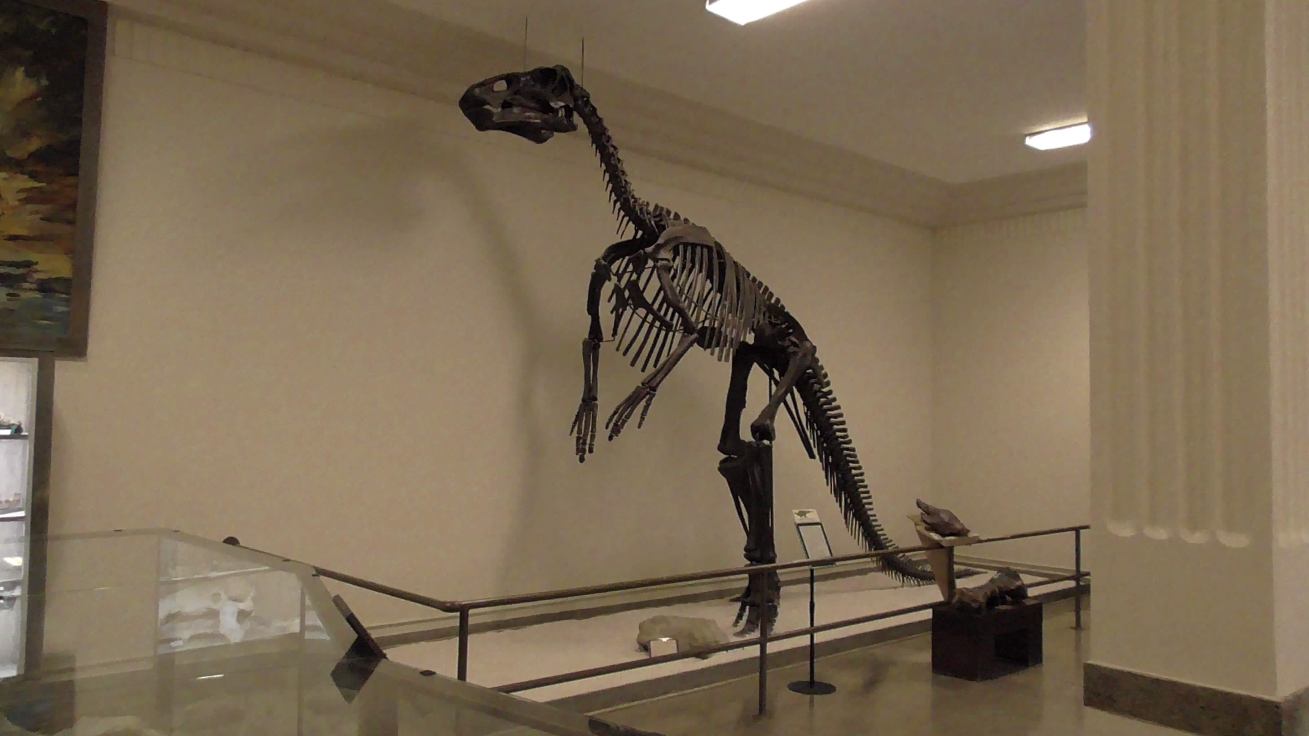 Duckbill (Hadrosaur)