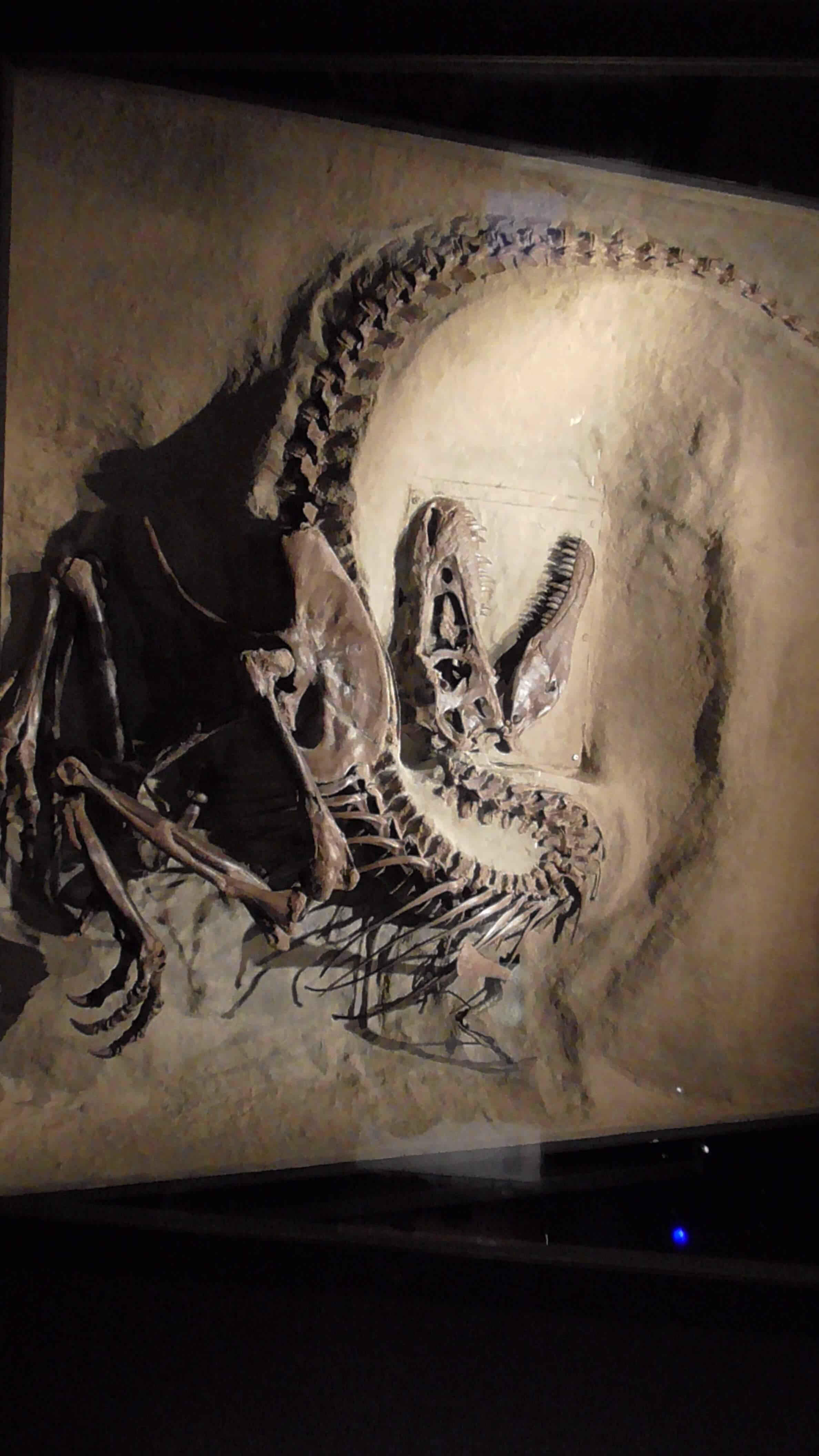Gorgosaurus, Royal Tyrrell Museum