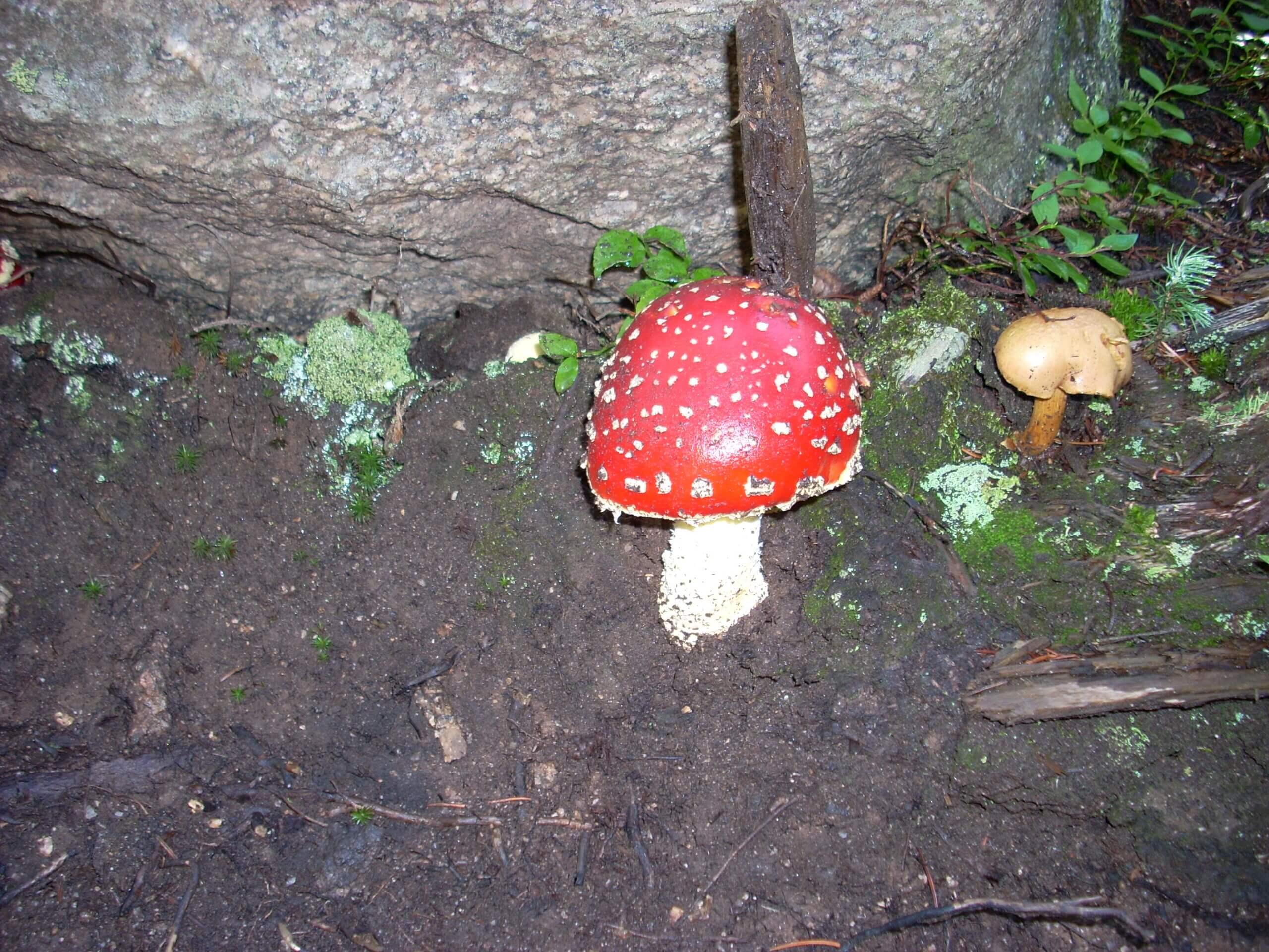 Mushroom on the way to Black Lake