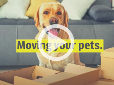 Moving Your Pets: To A New Home