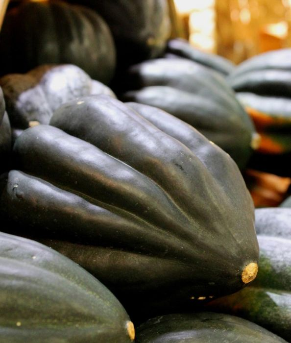 Table Queen Acorn Winter squash