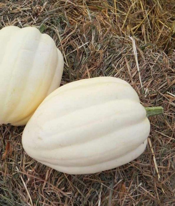 Acorn, Cream of the Crop Winter Squash