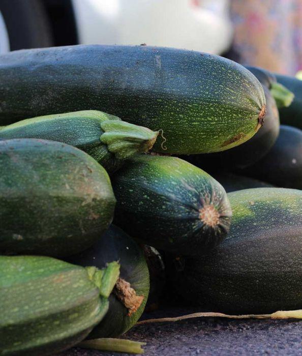 Dark Green Zucchini Summer Squash
