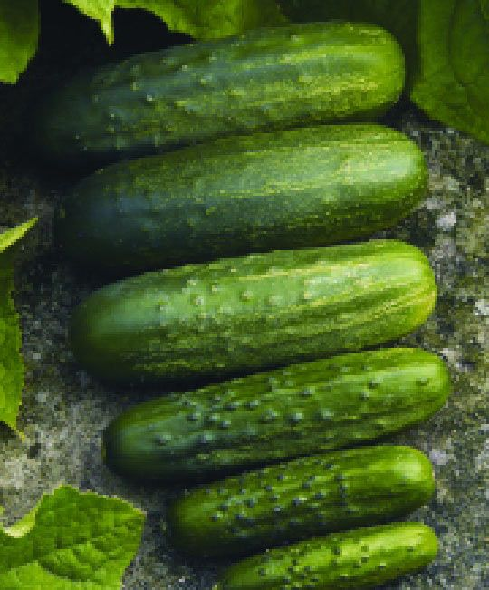 Homemade Pickler Cucumber