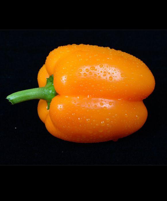 Orange Sun Pepper