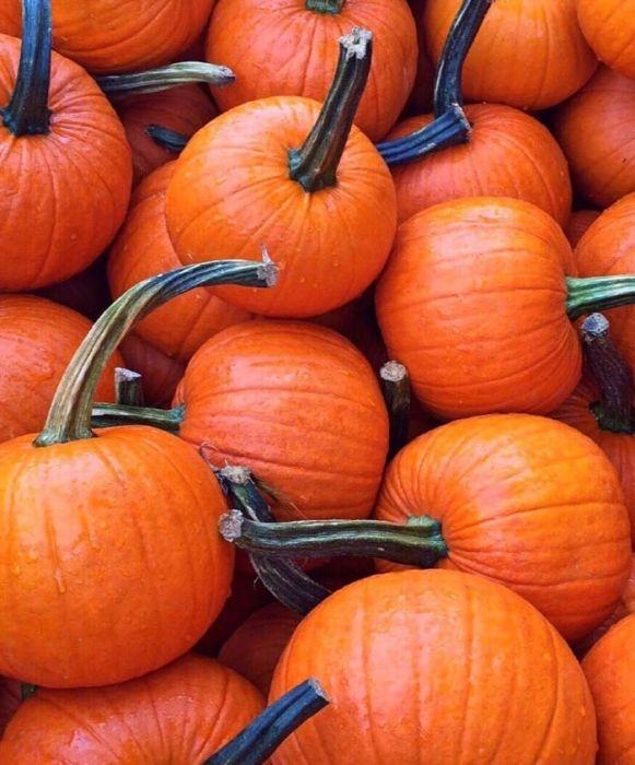 Spooktacular Pumpkin