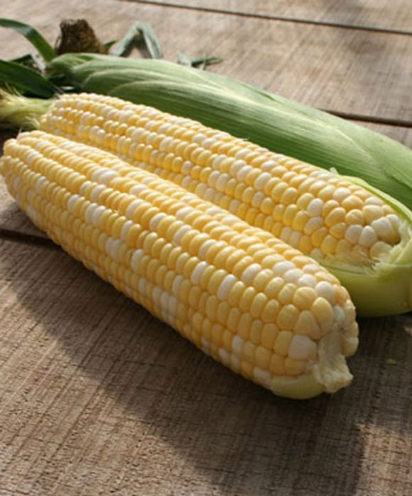 Sweetness Synergistic Bicolor Corn