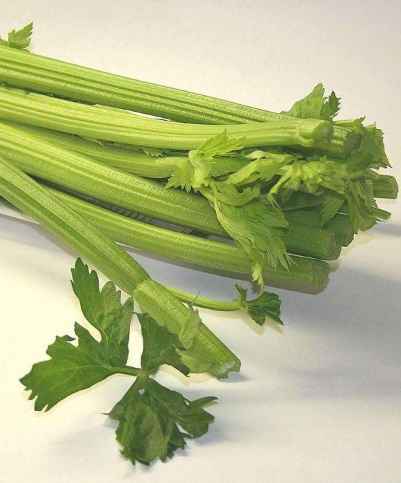 Utah 52-70 Celery