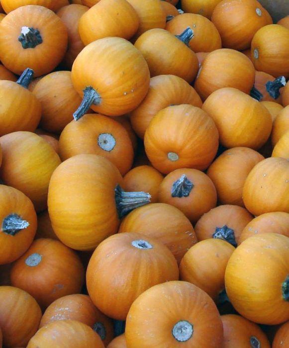 Wee Be Little Pumpkin