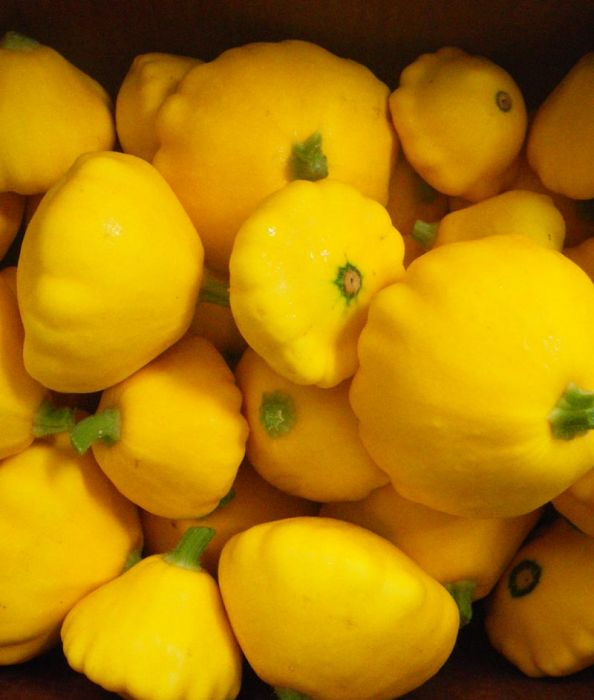 Yellow Scallop Squash