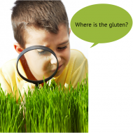 What is Gluten In?