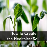 How to Create the Healthiest Soil