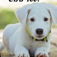 Pets Can Use CBD Too?
