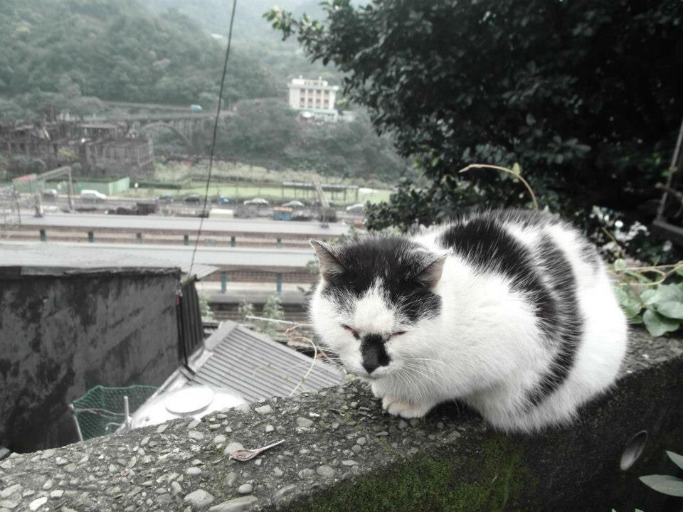 Monkey Cave Cat Village