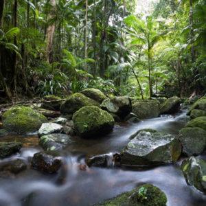 tropical backdrop