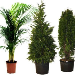 Live Plant Props