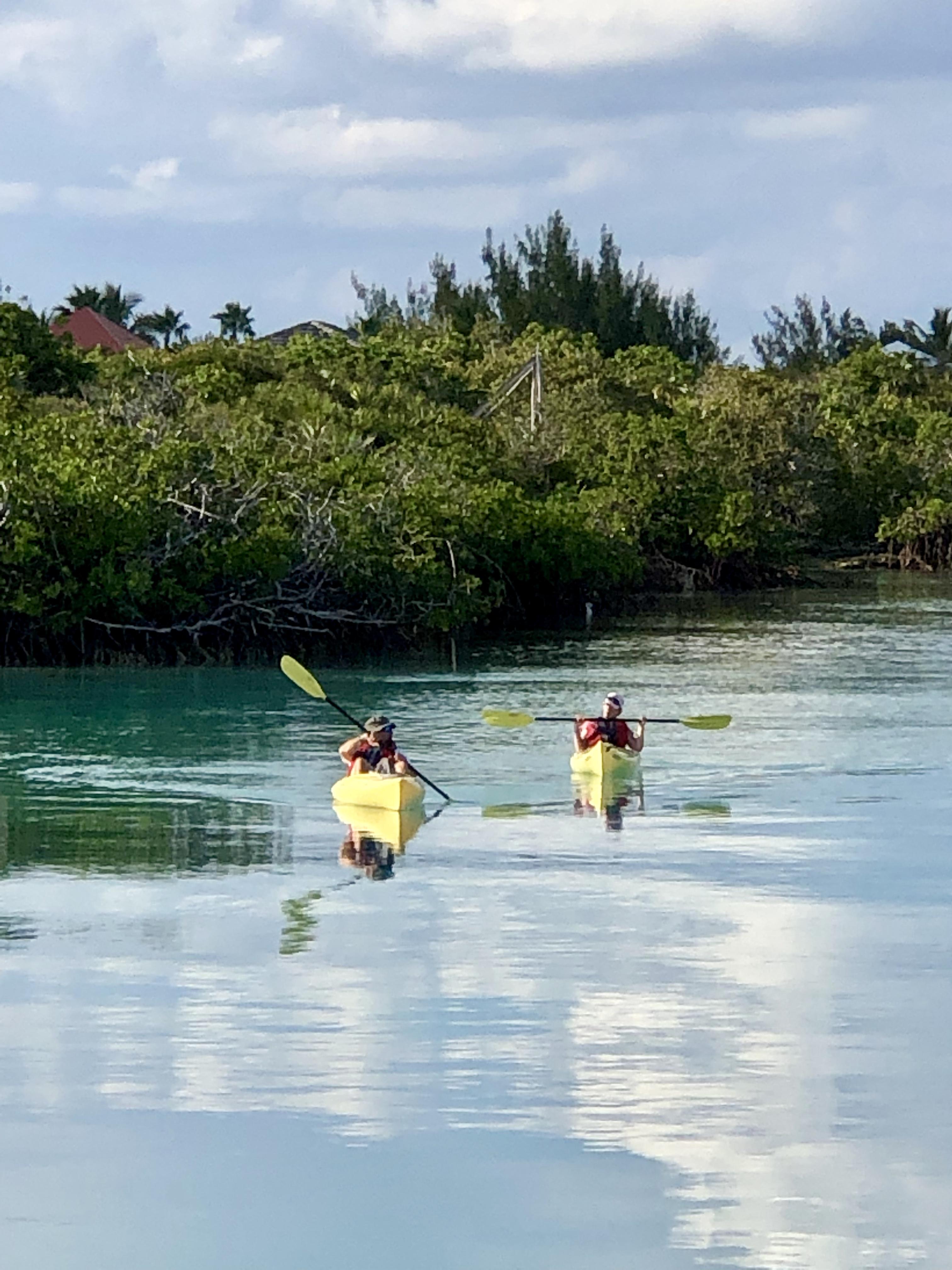 Kayak around Mangroves