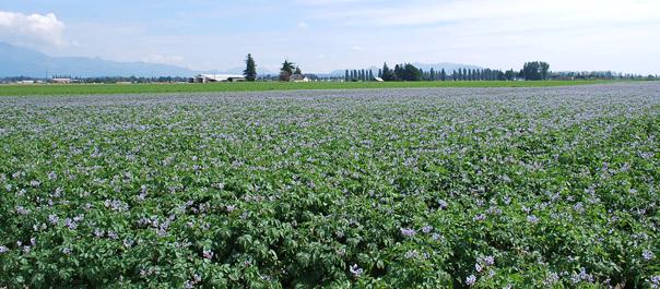 Field of Blooms