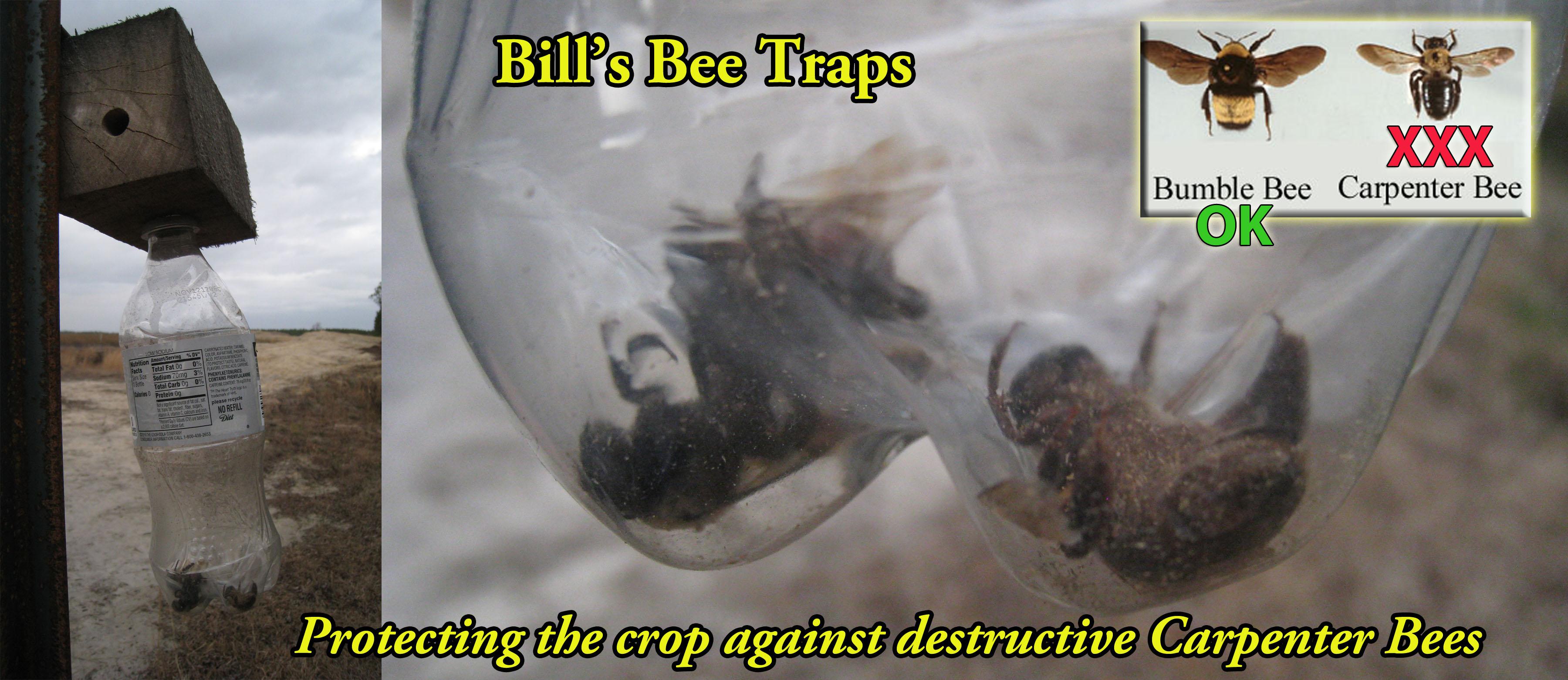Carpenter Bees are bad!