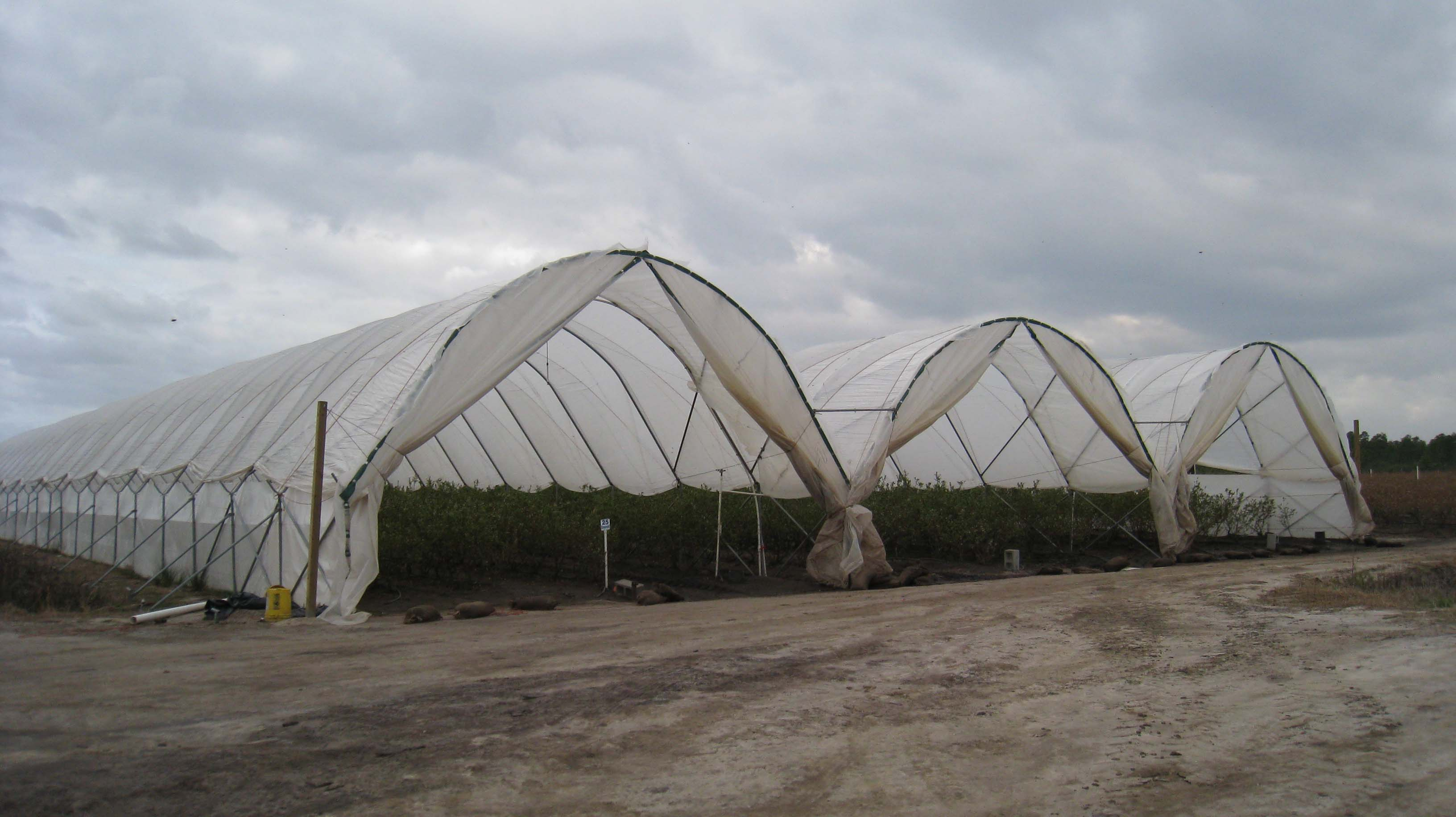 """These greenhouses, or """"hoop houses"""" contain early varieties"""