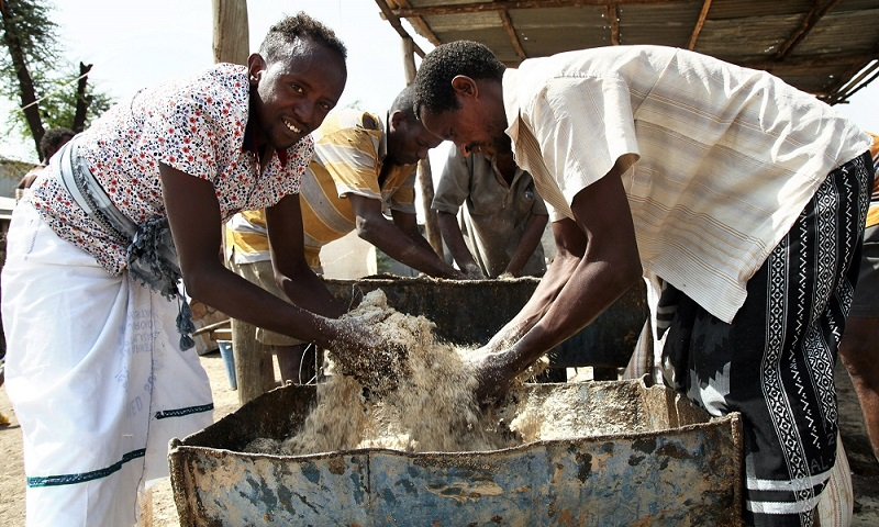 FAO Resilience Building Projects Pay Off in El Niño Affected Communities