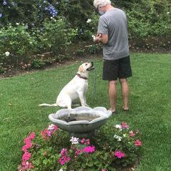 Anita's Loving Pet Services