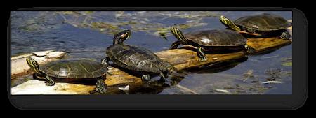 turtle stretch