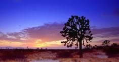 Joshua Tree Photo 2