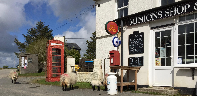 Sheep in England roaming.