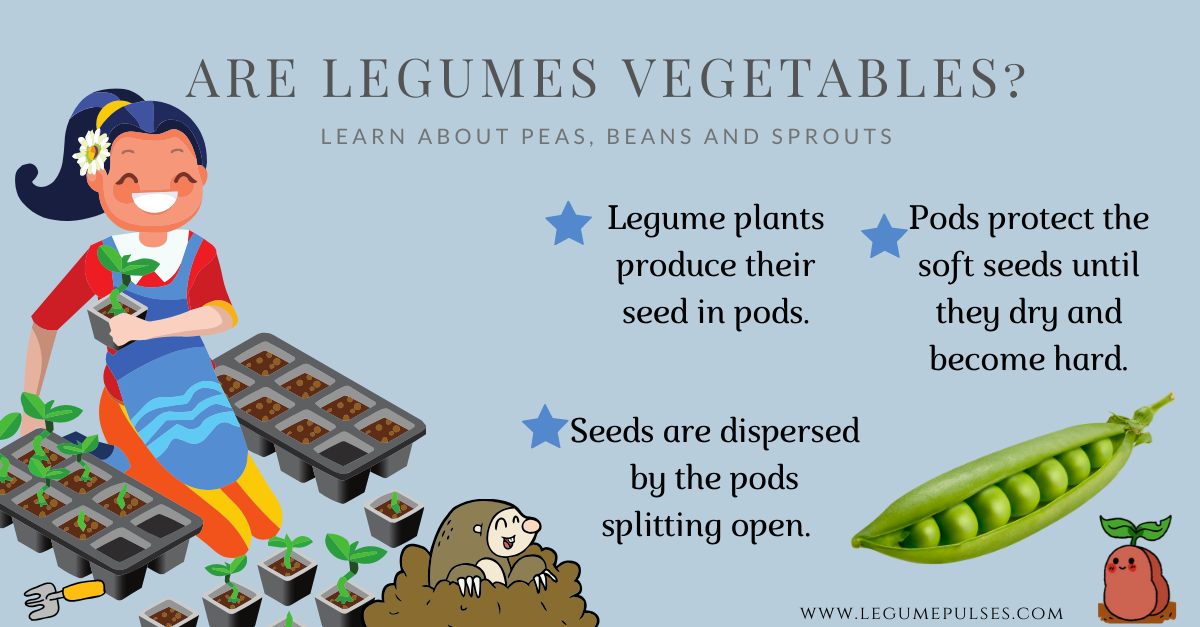 Are legumes vegetables?
