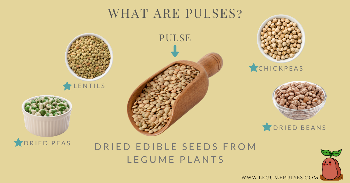 Four main types of pulses (lentils, dried peas, chickpeas and dried beans).