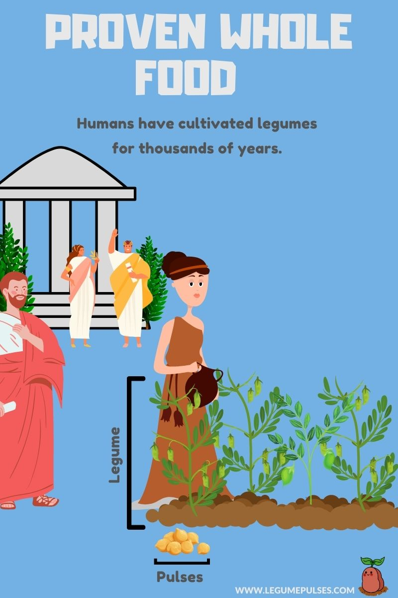 Legumes and pulses history